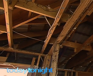 Termites devastate timber framed homes